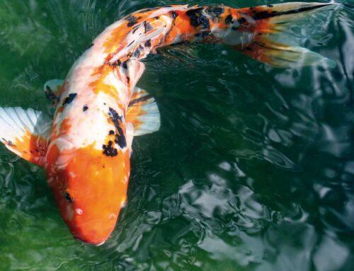 Wie ein Fisch im Wasser